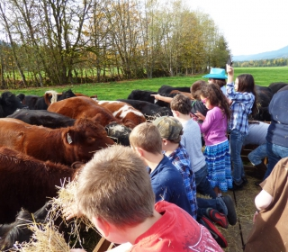 Students enjoyed getting up close and personal with cows on their field trip to Ovenell's on October 27, 2015.jpg