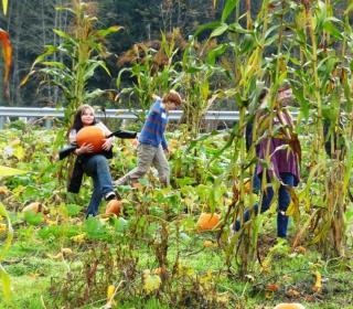 6th graders Alejandra and Colby harvest pumpkins at Cascadian Farm on October 22, 2015.jpg