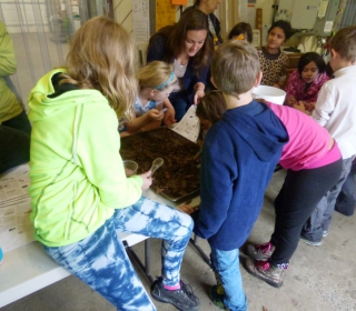 5th graders search for compost critters with Cascadian Farm Manager Ashley October 29, 2015.jpg